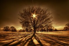 """Tree of light"" by George Saad"