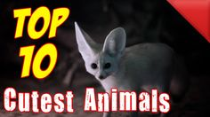 THE TOP 10 - Top 10 Cutest Animals On the Planet - Cute baby animals - P...