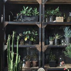 グリーン 観葉植物 インテリア 飾り方