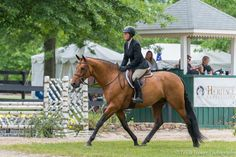 The Upperville Colt and Horse Show | Tricia Booker Photography