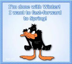 I'm done with winter quotes spring quote winter cold funny quotes looney toons daffy duck humor winter quotes Snoopy Quotes, Cartoon Quotes, Cartoon Humor, Cartoon Art, Spring Quotes, Winter Quotes, Funny Cold Weather Quotes, Daffy Duck Quotes, Bored Quotes
