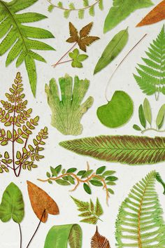Various fern leaves template | premium image by rawpixel.com / manotang