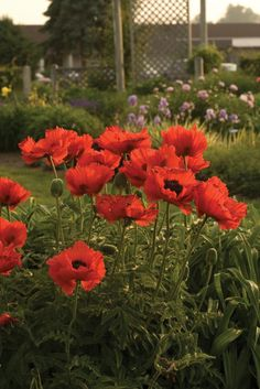 Learn which perennials are best left alone when it comes to division.