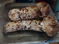 송이버섯 손질 방법 / 송이버섯 우려내는 방법 / 송이버섯 / 가을 송이버섯