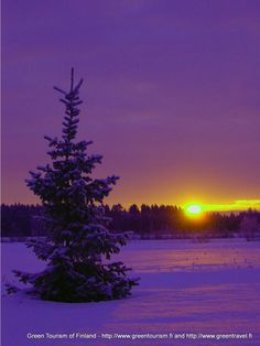 Winter morning in Finland - via Green Tourism of Finland®'s photo on Google+