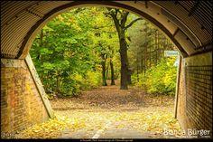 Blick in den Volkspark Jungfernheide (Okt 2016) #Berlin #Deutschland #Germany #biancabuergerphotography #igersgermany #igersberlin #IG_Deutschland #IG_berlincity #ig_germany #shootcamp #shootcamp_ig #pickmotion #berlinbreeze #diewocheaufinstagram #berlingram #visit_berlin #Herbst #autumn #canon #canondeutschland #EOS5DMarkIII #5Diii #Natur #nature #Landschaft #landscape #Charlottenburg
