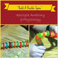 """Be The One"" : Apologia Anatomy & Physiology Unit Two: Build A Spine"
