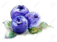 watercolor blackberries - Google Search
