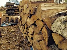 Let's get this out of the way from the start: I'm no woodpile master. My ancestors weren't lumberjacks back in the old country, nor have...