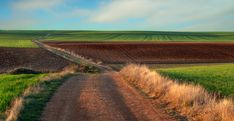 Luis Mariano, Fulfillment Services, Photo Craft, Online Printing, Vineyard, Country Roads, Stock Photos, Cereal, Nature