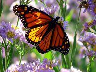 Butterfly Garden — The Botanic Garden at Oklahoma State University