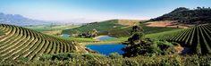 Jordan Winery Estate, Healdsburg, CA. Places To Travel, Places To Go, South African Wine, Pebble Beach, La Jolla, Napa Valley, Wines, San Diego, Vineyard