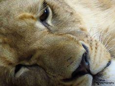 I love taking close up shots. Fort Worth Zoo, Dallas, Shots, Animals, Animales, Animaux, Animal, Animais