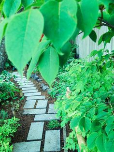 21 Stunning Shade Garden Design Ideas | Utilize other landscape features to give your yard fun shapes. Here, rectangular pavers set in a geometric pattern contrast fringetree's oval leaves.  Test Garden Tip: Go a step beyond this in your yard by mixing materials for a path. For example, replace a few of the pavers and use bricks, wood rounds, or other objects as stepping-stones. | bhg.com