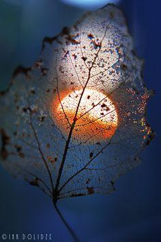 Moon in leaf lace                                         photographer: Irakli Dolidze | WWW.PHOTODOM.COM