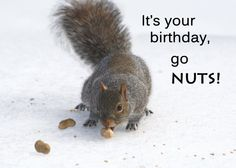 Happy Birthday card - Squirrel and peanuts on snow - Funny birthday cards - Squirrel birthday cards