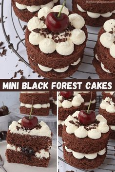 Easy to make Mini Black Forest Cakes, perfect for a dinner party, bake sale or afternoon tea. Featuring a chocolate genoise sponge, whipped cream, cherry jam and fresh cherries. #blackforest #thebakingexplorer #minicakes #afternoontea #smallcakes Black Forest Cupcakes, Black Forest Cake, Fun Cupcakes, Cupcake Cakes, Genoise Sponge, Basic Butter Cookies Recipe, Mini Chocolate Cake, Cream Tea, Just Cakes