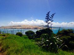 Hokianga Coast, Northland, New Zealand