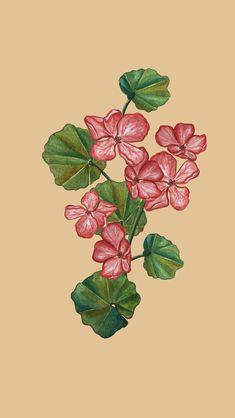 Of Wallpaper, Geraniums, Tropical, Antiques, Flowers, Plants, Painting, Art, Antiquities