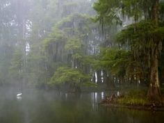 Great Egret Reflected in Foggy Cypress Swamp, Lake Martin, Louisiana, USA Photographic Print Louisiana Usa, Louisiana Swamp, Cypress Swamp, Cypress Trees, New Orleans, Grunge, Scenery, Canvas Prints, Arthur Morris