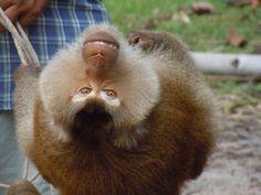 Funny monkey!