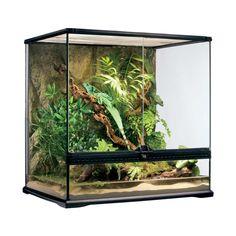 DIY Terrarium for poison dart frogs Animal Exhibits
