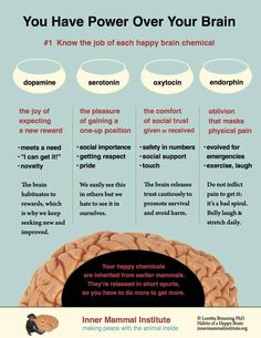 Infographics that explain serotonin, dopamine, oxytocin and endorphin as they help your mammalian brain navigate the world Mental And Emotional Health, Mental Health Awareness, Brain Facts, Brain Science, This Is Your Life, Physical Pain, Self Care Activities, Self Improvement Tips, Psychology Facts