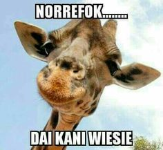 ✅ best memes about giraffe funny pictures giraffe funny pictures memes. Funny Pictures Can't Stop Laughing, Funny Pictures For Kids, Funny Pictures With Captions, Picture Captions, Funny Animal Pictures, Funny Animals, Cute Animals, Giraffe Meme, Caption For Him