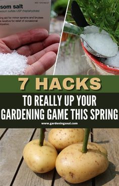 We've comprised a list of our favorite 7 gardening hacks that will not only save you time but transform your backyard into an oasis of greenery! #gardeninghacks #gardenhacks Gardening Hacks, Planting, Oasis, Greenery, Gardens, Backyard, Fruit, Spring, Plants