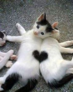 #Cats making a perfect heart shape