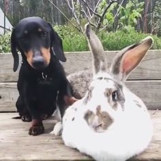 Who is your Best Friends ? - Jacqueline Sahin - Who is your Best Friends ? Cute Funny Animals, Cute Baby Animals, Funny Cute, Funny Dogs, Animals And Pets, Cute Cats, Farm Animals, Dachshund Puppies, Cute Puppies