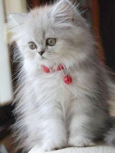18 of the Fluffiest Cats on the Planet - We Love Cats and Kittens