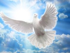 Dove Pictures, Pictures To Paint, Art Pictures, Phoenix Images, Holy Spirit Come, Pastel Sky, Christian Pictures, Dove Bird, Peace Art