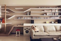 Amazing cat shelves