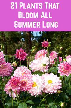Garden Yard Ideas, Easy Garden, Lawn And Garden, Garden Decorations, Backyard Ideas, Outdoor Flowers, Outdoor Plants, Outdoor Gardens, Veggie Gardens