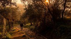 Il sentiero verso l'oasi Lipu - Foto scattata da Andrea Serra con α5000.     Instagram: http://instagram.com/novacitizen/