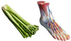 Body parts same as veg
