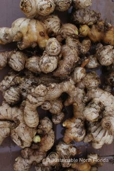 It's Easy Growing Ginger And Turmeric - Fresh, Organic, Year Round