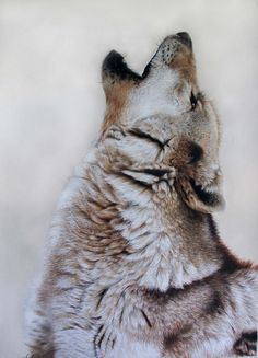 Award winning, luxury wildlife artwork by Carla Grace Art. Australia based artist Carla Grace paints breathtaking realistic wildlife paintings of animals from all over the globe. Wildlife Paintings, Wildlife Art, Grace Art, Wolf Artwork, Wolf Pictures, Realism Art, Australian Art, Limited Edition Prints, Paintings For Sale