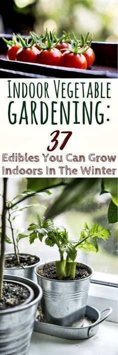 Indoor Vegetable Gardening: 37 Edibles You Can Grow Indoors In The Winter - As a.... ** Discover more at the image link #wintervegetablegardening #Containervegetablegardening #indoorvegetablegardeningwinter #vegetablesindoor
