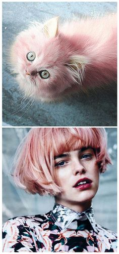 and it's feline=fashion friday again! sept 29th. first seen over at the studio jane fb page - www.facebook.com/pages/Studio-Jane/412136338814172