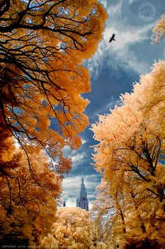 Tokyo, Beautiful!  photo: Alfie Goodrich, British Photographer/Teacher based in Tokyo Japan.
