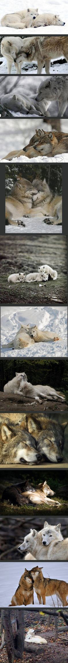 This entry was posted in Siberia and tagged siberia nature pictures, siberia pictures, siberia pinterest on July 3, 2016 - See more at: http://www.sienceandnature-pepi.stfi.re/siberia/they-are-truly-beautiful-and-so-loving-to-each-other/?sf=apprkkp#ab - They are truly beautiful and so loving to each other.