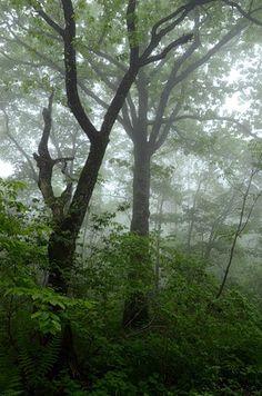 "Деревья в тумане (заказник ""Леопардовый""). © М. А. Кречмар (http://kiowa-mike.livejournal.com/). #Tree #Trees #Mist #Mists"