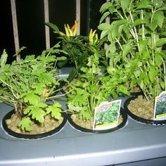 DIY Hydroponics ~~ gives you full step-by-step instructions for 18 projects to get your indoor harvest growing