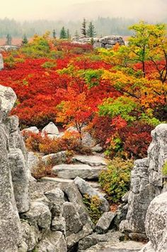 Dolly Sods Wilderness in West Virginia - this makes me think of my Uncle Whitey.