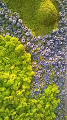 Bas-relief, reindeer moss on OSB board 140x47 cm (closeup). Vertical or horizontal mounting. 275 EUR + shipping  If you want to order this or similar picture go to www.greenalleys.com.pl and send me an email.