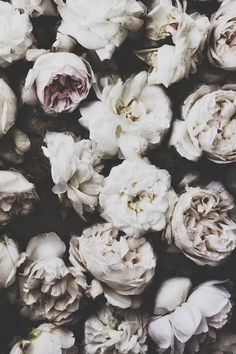 Vintage White Roses ★ Find more Cute Vintage wallpapers for your #iPhone + #Android @prettywallpaper