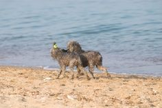 take them to the beach! Here is an article about pet friendly beaches in NJ