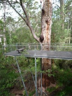 1st viewing platform in Valley of the Giants Tree Top Walk